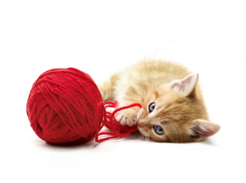 Kitten「Kitten playing」:スマホ壁紙(10)