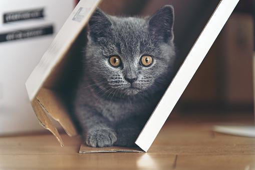 Kitten「ダン ボールで遊ぶ子猫」:スマホ壁紙(15)