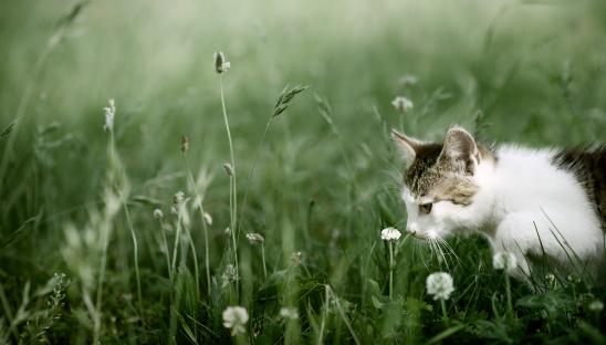 子猫「キトンで遊ぶ芝生」:スマホ壁紙(0)