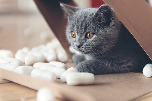 Animal Whisker「Kitten playing with packing peanuts」:スマホ壁紙(7)