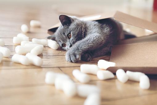 子猫「パッキング ピーナッツにじゃれる子猫」:スマホ壁紙(11)