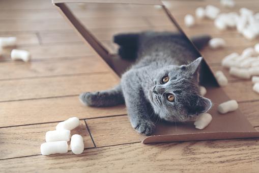 Kitten「パッキング ピーナッツにじゃれる子猫」:スマホ壁紙(14)