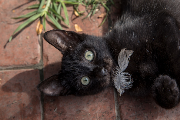 Small Office「The Cats Of Istanbul」:写真・画像(10)[壁紙.com]