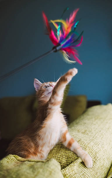 Kitten playing with feather toy:スマホ壁紙(壁紙.com)