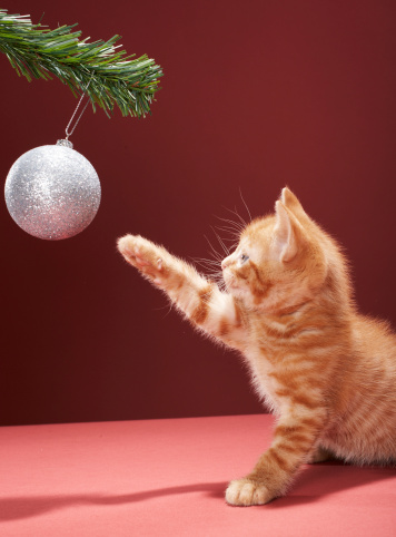 Kitten「Kitten playing with Christmas bauble on tree」:スマホ壁紙(12)