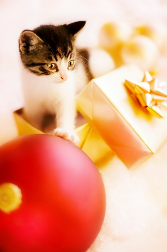 子猫「Kitten Playing with Christmas Wrappings」:スマホ壁紙(15)