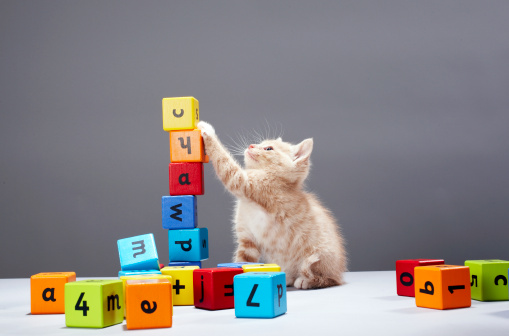 Kitten「Kitten playing with building blocks」:スマホ壁紙(2)