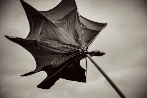 Umbrella「Wild umbrella」:スマホ壁紙(3)