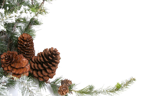 Pine Cone「Christmas wreath with pine cones and snow isolated on white」:スマホ壁紙(13)
