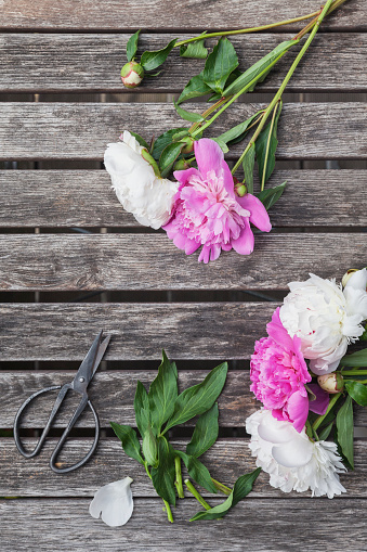 Picnic Table「Pink and white Peonies and scissors on garden table」:スマホ壁紙(18)