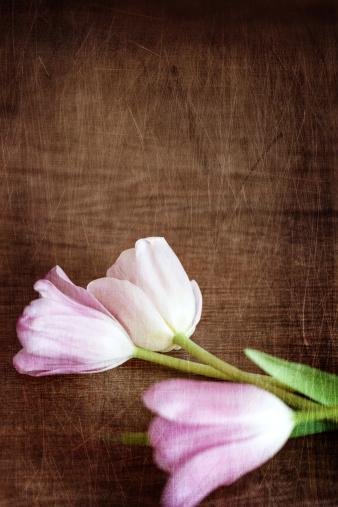 チューリップ「ピンクと白のチューリップに硬質の木製フロアー」:スマホ壁紙(4)