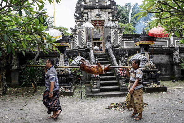Roast Dinner「Timbrah Villages Offer Roasted Pigs To The Gods As Part Of Usaba Dalem Ritual」:写真・画像(17)[壁紙.com]