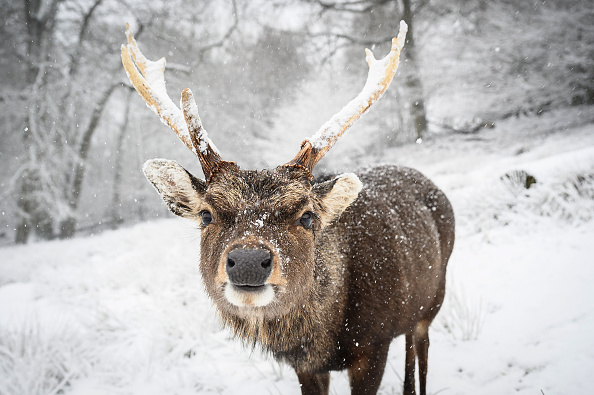 Weather「Big Freeze Brings Snow, Ice and Flooding To The UK」:写真・画像(18)[壁紙.com]
