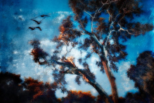 Multiple Exposure「Photomontage of trees in southern Louisiana composited with cloud-like texture」:スマホ壁紙(4)
