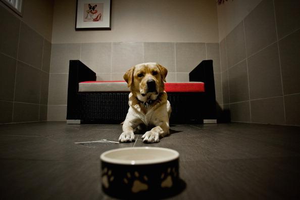 飼育動物「'Actuel Dogs' - Luxury Dogs Hotel Visit」:写真・画像(9)[壁紙.com]