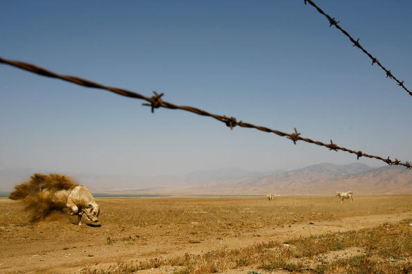 Farm「California Agriculture Faces Challenges As Drought Continues」:写真・画像(9)[壁紙.com]