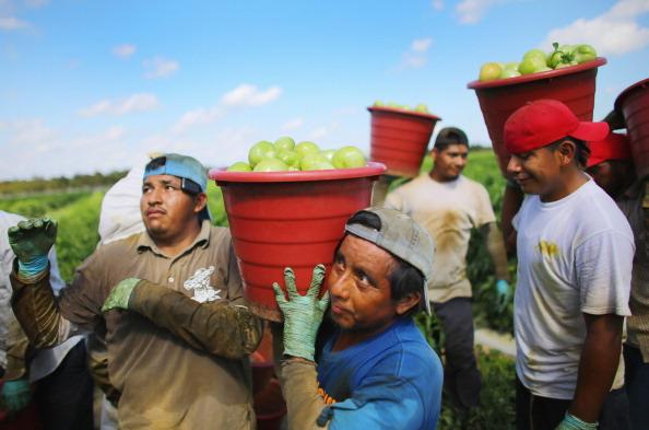 Tomato「U.S. - Mexican Tomato Trade War Averted」:写真・画像(12)[壁紙.com]