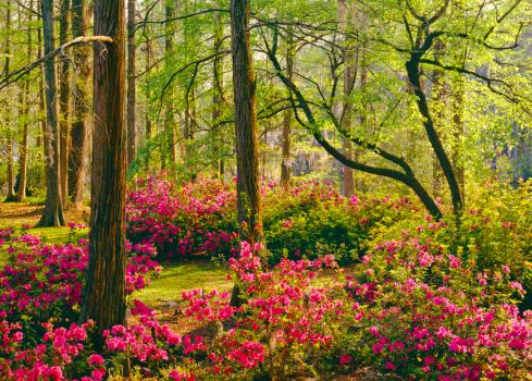 flower「ミナミウッドランド庭園」:スマホ壁紙(4)