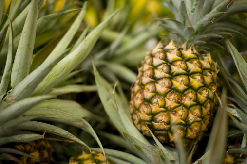 Hawaii Islands「A ripe pineapple growing on the plant」:スマホ壁紙(8)