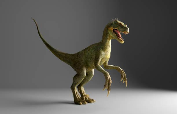 Velociraptor dinosaur standing on gray background:スマホ壁紙(壁紙.com)