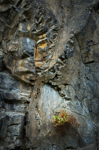 Basalt「Lichens on basalt」:スマホ壁紙(8)