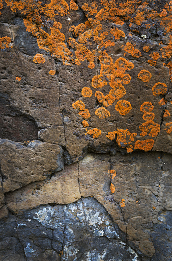 Basalt「Lichens on basalt」:スマホ壁紙(12)