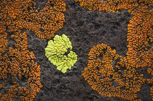 Basalt「Lichens on basalt」:スマホ壁紙(7)
