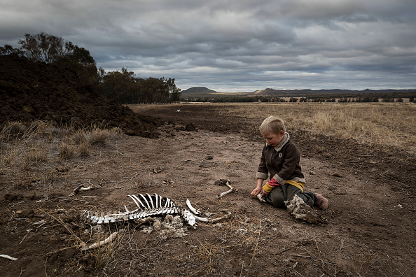 Livestock「New South Wales Farmers Battle Crippling Drought」:写真・画像(2)[壁紙.com]