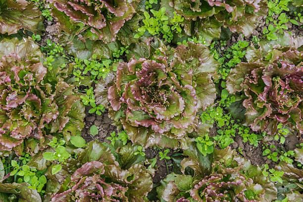 Organic agriculture:スマホ壁紙(壁紙.com)