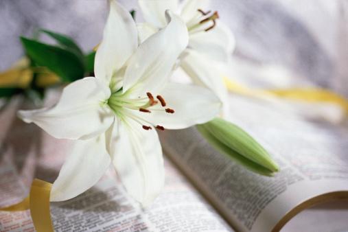 イースター「Lilies on open Bible」:スマホ壁紙(15)
