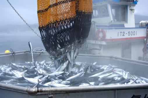 セイヨウカジカエデ「Fishing port」:スマホ壁紙(8)