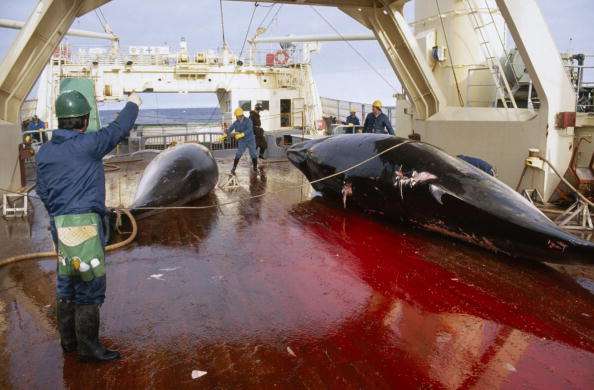 Japan「Japanese Whaling」:写真・画像(4)[壁紙.com]