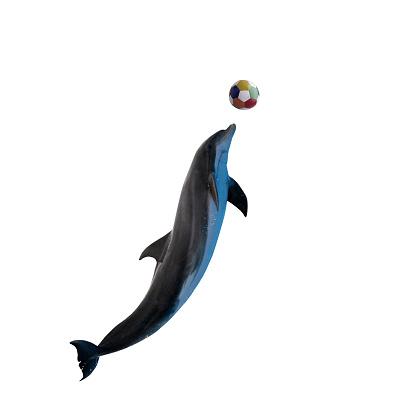 Bottle-nosed Dolphin「Dolphin」:スマホ壁紙(12)