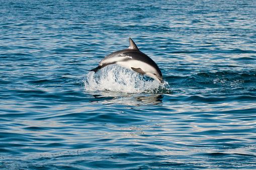 イルカ「ドルフィン」:スマホ壁紙(18)
