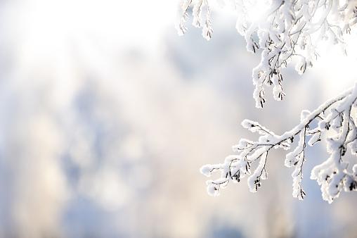 落葉樹「雪で覆われた冬の枝」:スマホ壁紙(6)
