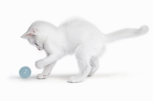Curiosity「White Kitten playing with ball」:スマホ壁紙(12)