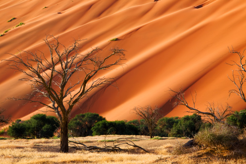Wilderness Area「Namib」:スマホ壁紙(10)