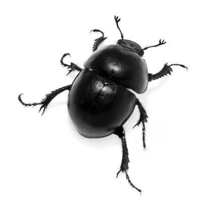 Beetle「Beetle on White」:スマホ壁紙(15)