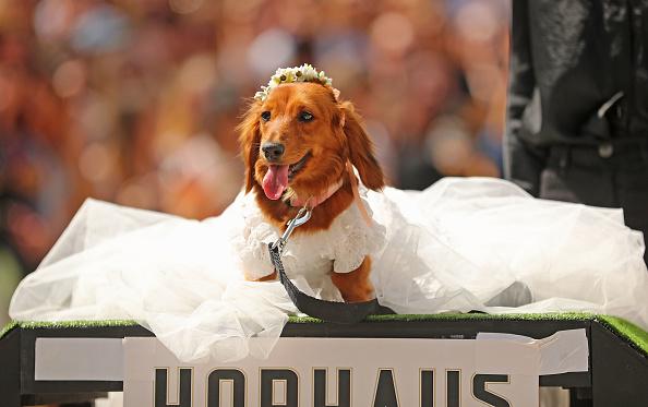 ドレス「Annual Dachshund Race Celebrates Start Of Oktoberfest In Australia」:写真・画像(16)[壁紙.com]