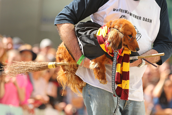 Annual Event「Annual Dachshund Race Celebrates Start Of Oktoberfest In Australia」:写真・画像(2)[壁紙.com]