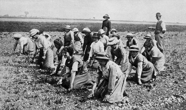 Land「Land girls at work on a farm」:写真・画像(10)[壁紙.com]