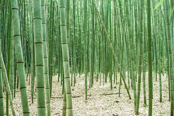 Japan, Arashiyama, bamboo forest:スマホ壁紙(壁紙.com)