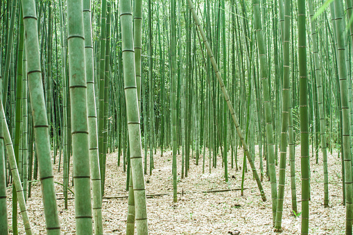 Spirituality「Japan, Arashiyama, bamboo forest」:スマホ壁紙(17)