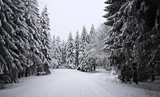クロスカントリースキー「Germany, Thuringia, View along snowy forest trail」:スマホ壁紙(15)