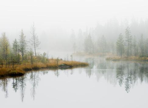 Fog「Water in forest」:スマホ壁紙(17)