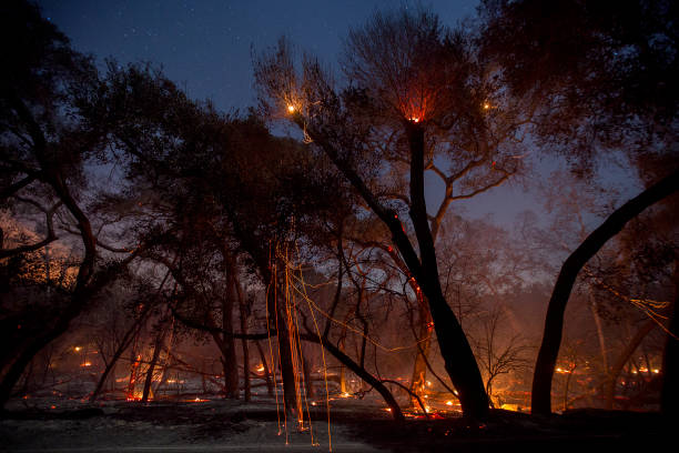 カリフォルニア州「Southern California Wildfires Forces Thousands to Evacuate」:写真・画像(13)[壁紙.com]