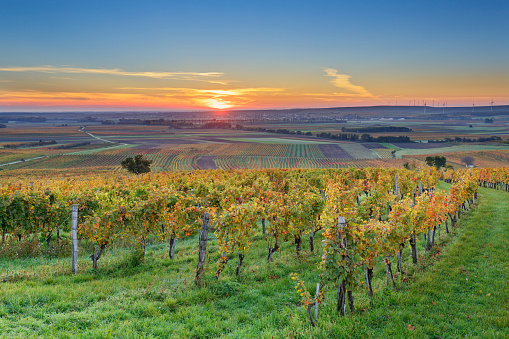 Austria「Austria, Burgenland, Oberpullendorf District, near Neckenmarkt, vineyards at sunrise in autumn, View over Deutschkreutz, Blaufraenkischland」:スマホ壁紙(17)
