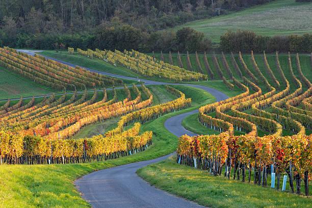 Austria, Burgenland, Oberpullendorf District, Neckenmarkt, road and vineyard in autumn:スマホ壁紙(壁紙.com)