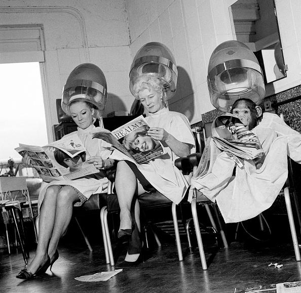 Spa「Chimp At A Hairdresser's」:写真・画像(3)[壁紙.com]