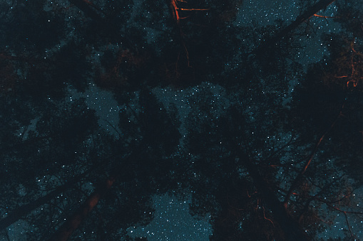 Scandinavia「Sweden, Sodermanland, treetops under starry sky at night」:スマホ壁紙(2)